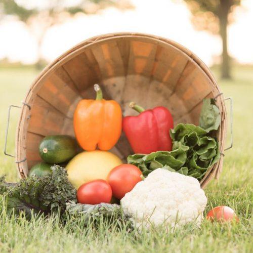 Greenhouse Harvest Basket